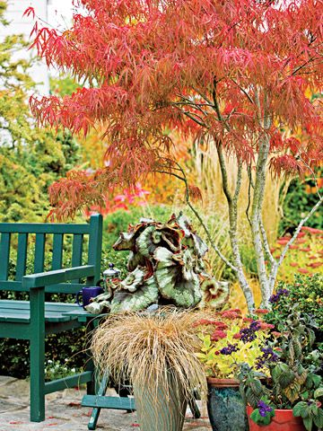 Check out 20 Favorite Small Trees You Can Plant Like This Colorful Japanese Maple!