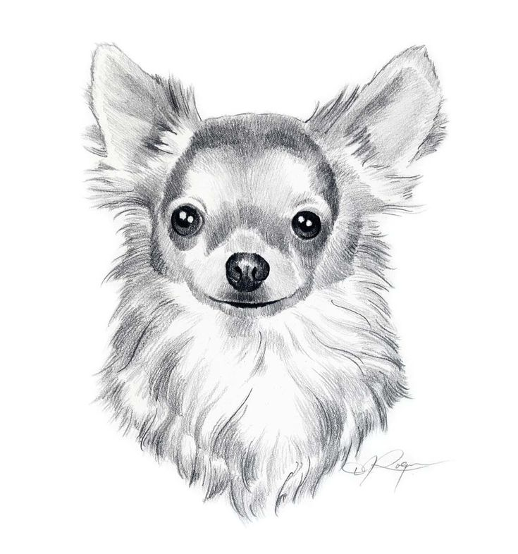 drawings of dogs | LONG COAT CHIHUAHUA Dog Pencil Drawing ART Print Signed by Artist DJ ...