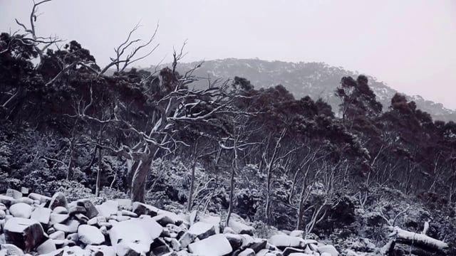 Jansz Tasmania-Method Tasmanoise