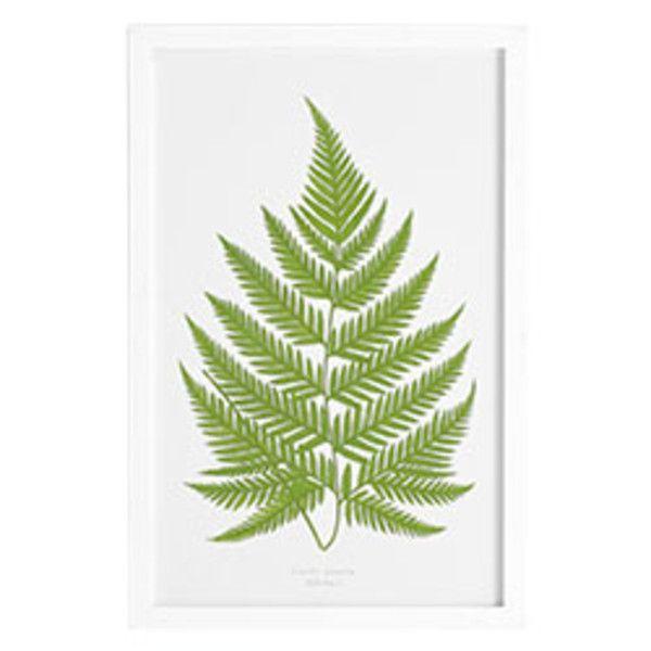 Perennial Fern Print - Japanese