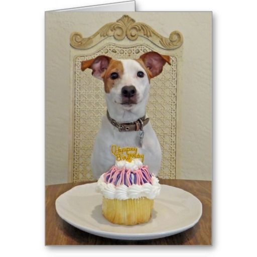 1000+ Ideas About Happy Birthday Puppy On Pinterest
