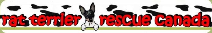 Rat Terrier Rescue Canada - Rat Terriers for Adoption in Canada
