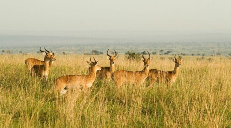 Uganda   ©Lingbeek