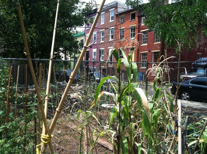 risks of urban farming: soil contamination