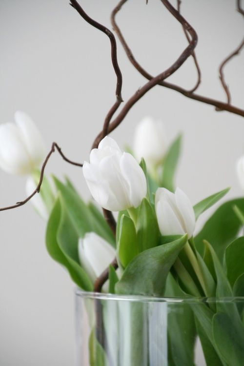 white tulips and branches in glass