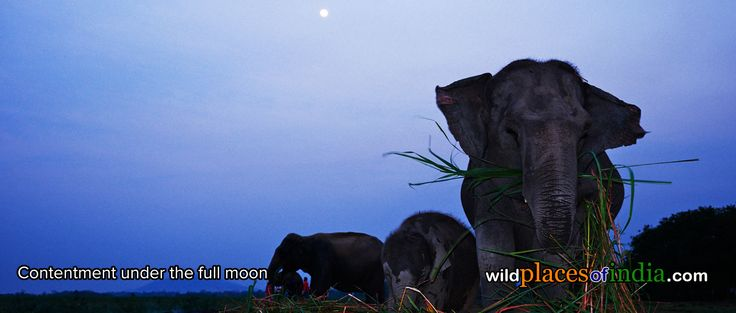 Find contentment in the wild places of India. Come travel with us to Kaziranga.  http://wildplacesofindia.com/kaziranga-national-park.html