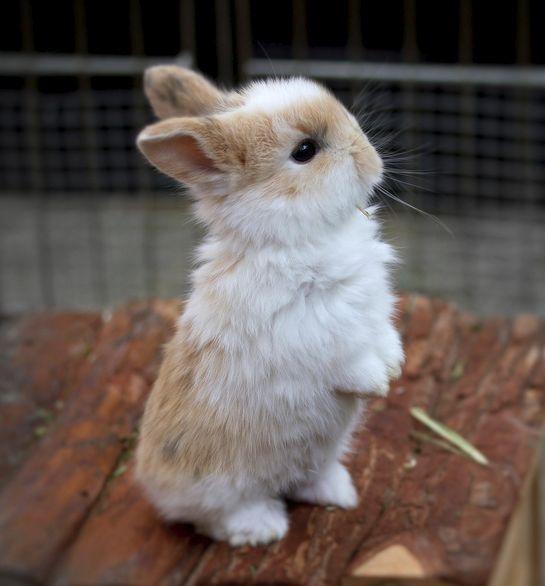 lookit my tiny pawsCute Animal, Bunnies Baby, Cutest Tiny Animal, Pets, Easter Bunnies, Baby Bunnies, Baby Animal, Bunnies Rabbit, Cutest Animal