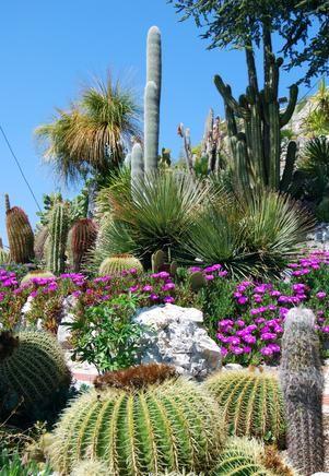 Australian Desert Plants and Cactus
