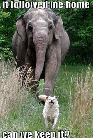17 Best Ideas About Funny Elephant On Pinterest Funny