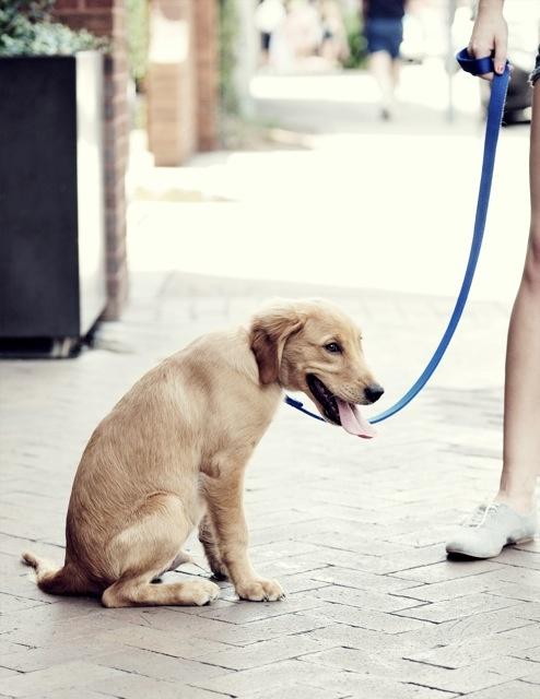 Out & About #savannah #dogYws Doggie, Savannah Dogs, Leash Dogs, Dogs Spots, Historical Savannah, Pets Friends, Friends Savannah, Furries Friends, Savannah Georgia