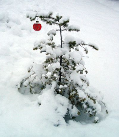 ♥...charlie brown Christmas tree, the real thing, lol!