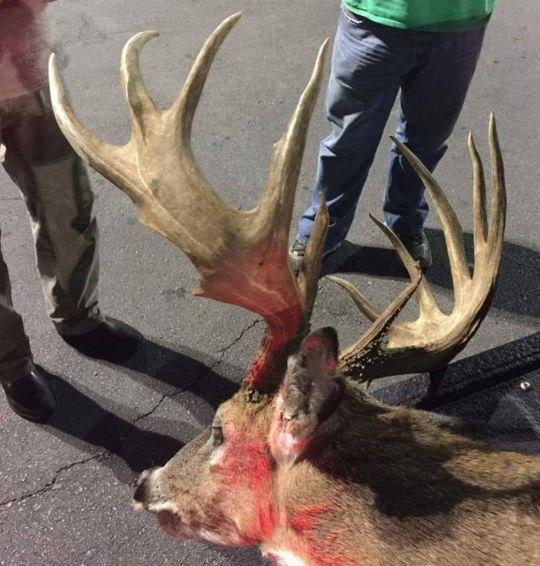 1195 Best Images About Deer Hunting On Pinterest Deer