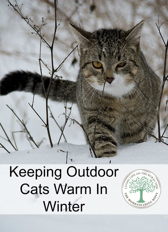 Here's some tips on how to keep outdoor cats warm in the winter. The Homesteading Hippy via @homesteadhippy