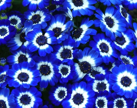 Find This Pin And More On Wedding Flowers Cobalt Blue