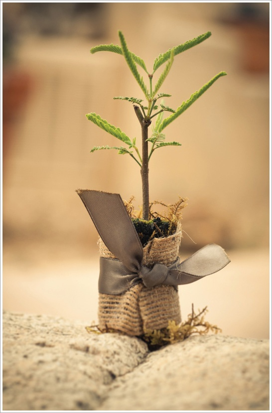 Eco Wedding Favors Lets Research How Much This Would Be