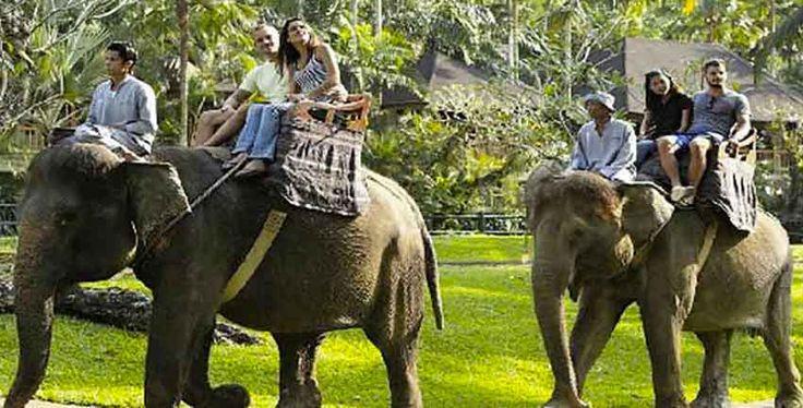 Bali Zoo Elephant Long Trek Exclusive Safari
