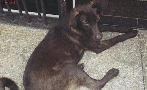 Cadela SRD preta está perdida ou abandonada no Santana, em SP