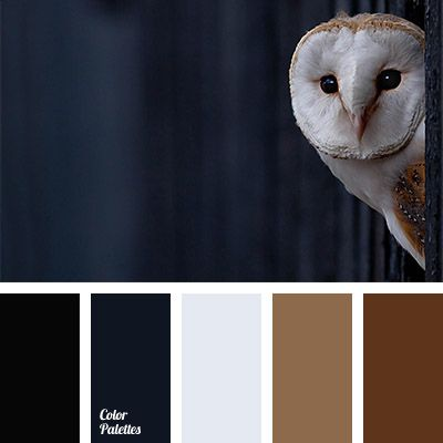 black and dark blue, cold and warm shades, color combination for winter, color of owls plumage, dark-blue, gray dark blue, light and dark brown, off-white color