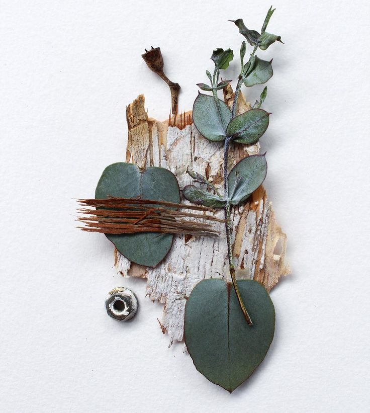 #found #collage #australianflora