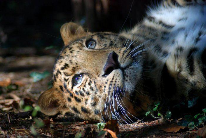 Dal più piccolo al più grande: ritratti di #animali in via d'estinzione