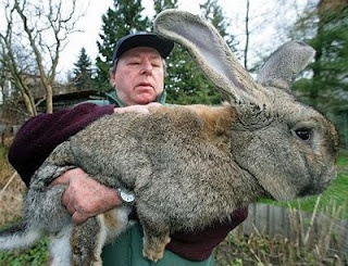 Image result for picture of a mean jack rabbit