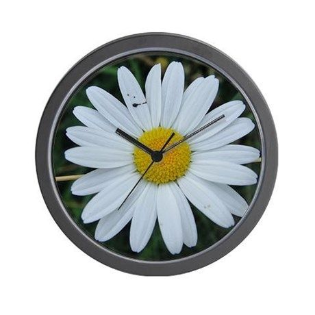 Cute, white chrysanthemum Wall Clock on CafePress.com by fotosbykarin #clocks #wallclocks #homegifts #gifts #chrysantemum #cute #fotosbykarin #cafepress #KarinRavasio