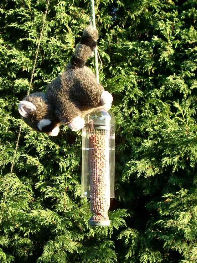 DIY squirrel proof bird feeder  LOL this is genius & also hilarious!