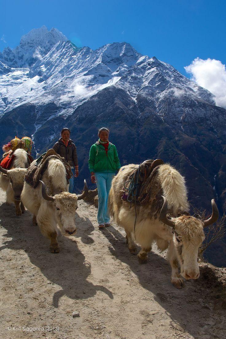 Traffic Jam on Mount Everest Base Camp . Nepal