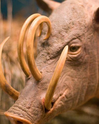 15 animaux que vous ne connaissez surement pas : Vol. 2