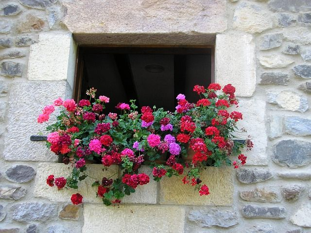 Which flowers are the most suitable to keep in windows?