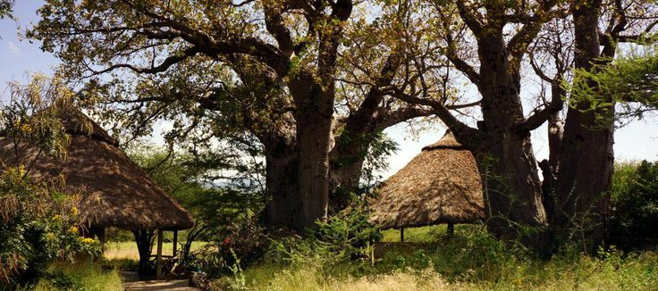 ol mesara small tented camp in tanzania