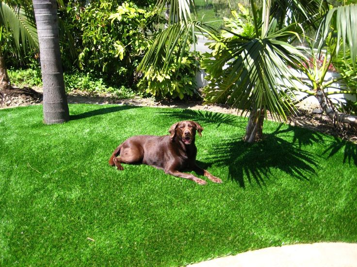 images of synthetic turf | How Much Does Artificial Grass Cost To Install?