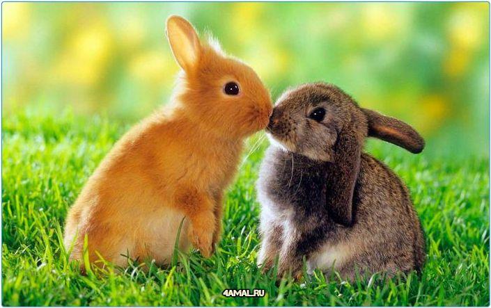 Кролики  #животные #россия #animal #animals #russia #pig #домашние #москва #спб #самара #тула