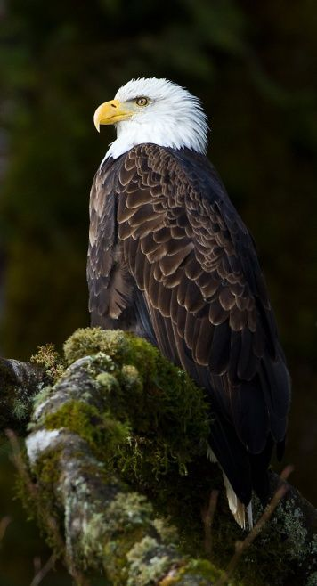 Photographing the Bald Eagles of Skagit River - north/east of Seattle, Washington