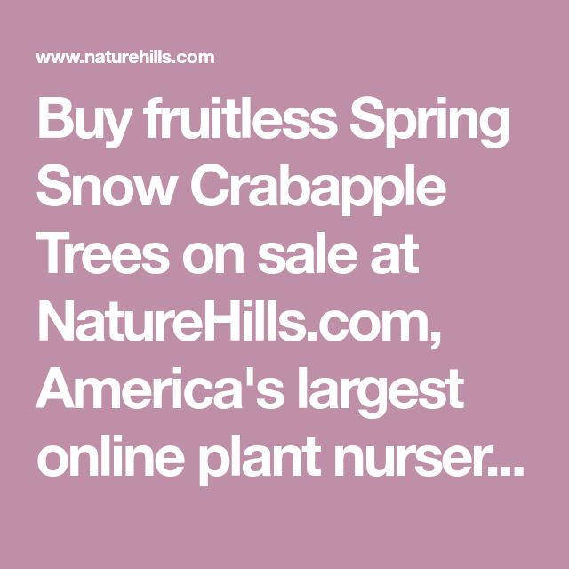 Buy fruitless Spring Snow Crabapple Trees on sale at NatureHills.com, America's largest online plant nursery. Also known as Malus x Spring Snow, find up to 30% off!