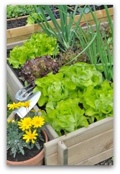 Vegetable Garden Designs for Beginner Gardeners