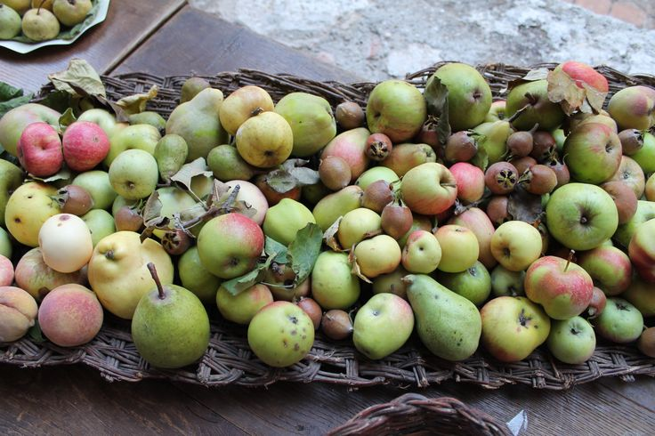 Umbrian fruits