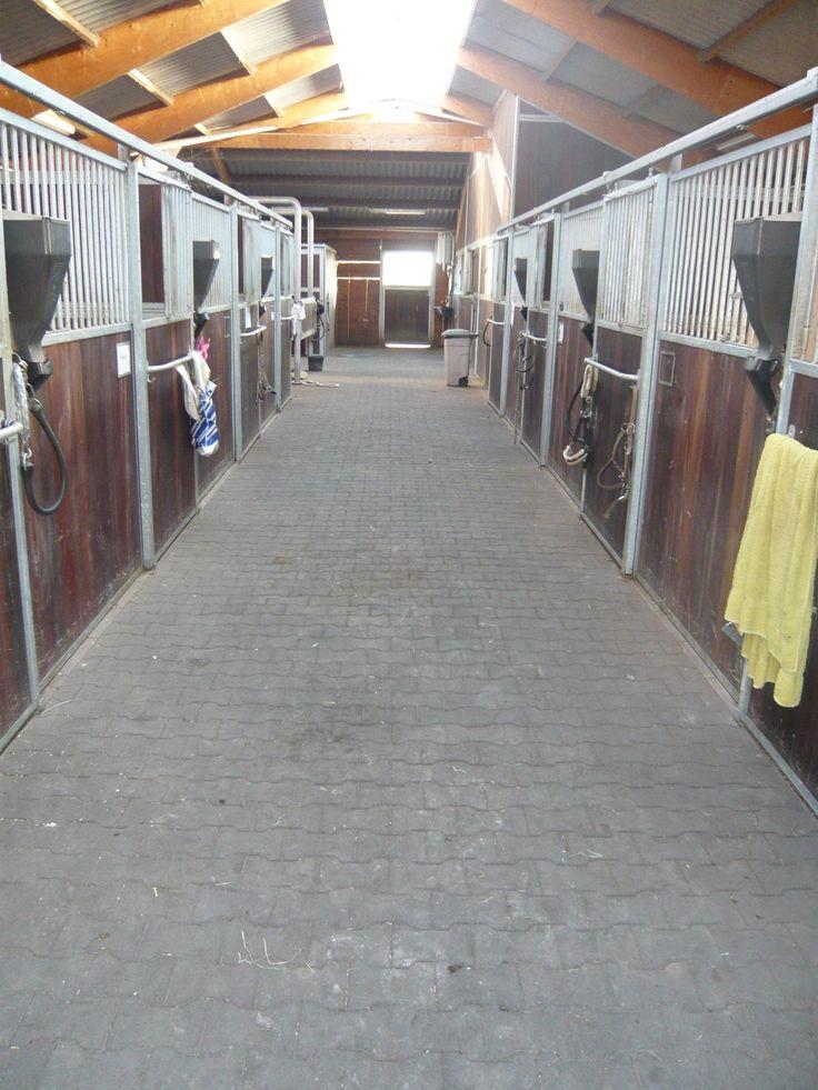 ErgoPave H-Link Equine gummifliser anvendt på staldgang i hestestald hos Christina Kolter. ErgoPave H-Link Equine er hårdføre og robuste gummifliser, som er multi-anvendelige til etablering af gummibelægninger for hestestalde, paddocks, golfklubber, skøjtehaller, legepladser, forlystelsesparker, multibaner, børnehaver, skoler, udendørs fitness, terrasser og havegange m.v.