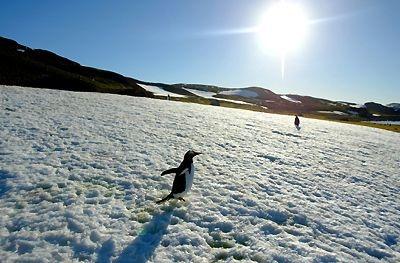 Antártica - extremo Sur de Chile