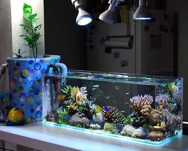 Coolest nano reef saltwater aquarium ever.  I think this one is only 7 gallons. Love their filter/sump cover.