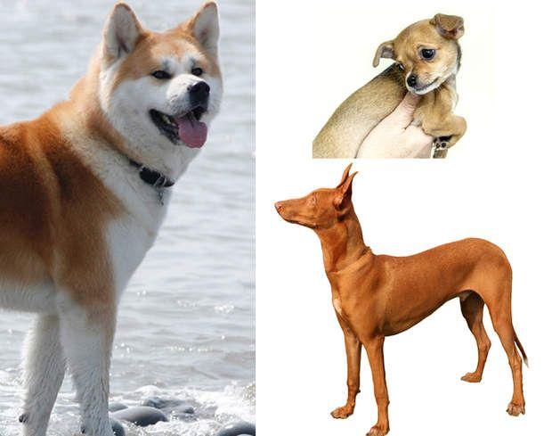 Quelles sont les races de chiens les plus chères ?Plus de 7 millions de chiens partagent la vie des Français. Mais posséder un toutou à un coût, en témoignent les prix élevés de certaines races de chien.Compter 800 euros au minimum, en animalerie ou chez un éleveur, pour les races de chiens les plus classiques: caniches, teckels, labradors…Certaines races, plus rares ou plus prisées, peuvent atteindre les 5.000 euros.Ces chiens ont un pedigree et sont souvent des animaux de concours…