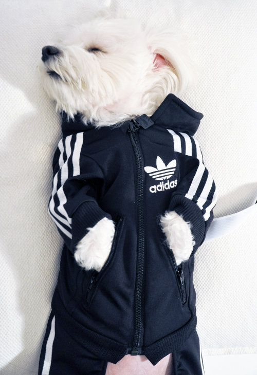 A #DIY doggy tracksuit... haha // How to convert kids' clothes into dog clothes.