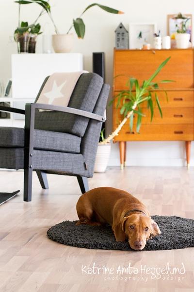 Home decore, Interior, Interiør, Dog, Hund, Dachs, www.katanita.net - Katrine Anitas magiske verden