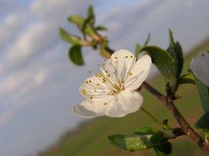 Wiosna na http://blogiceo.nq.pl/sp7team/2015/03/21/pierwszy-dzien-wiosny/ !