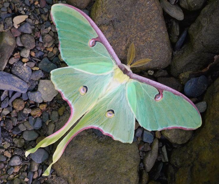 https://www.google.com/search?q=purple moth
