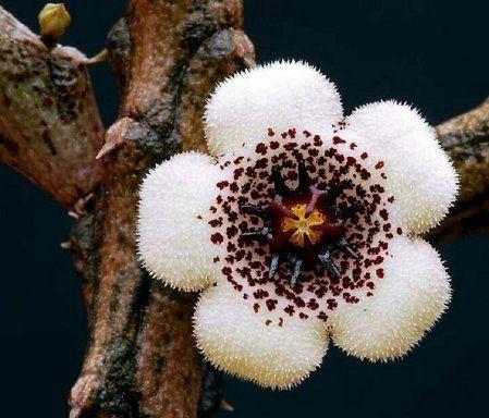Hermosas, mágicas y misteriosas flores de suculentas