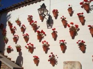 Cultivo de malvones: tres estaciones de flores - Los malvones son plantas muy resistentes, ideales para adornar jardines o balcones por su abundante y duradera floración. El malvón es una planta perenne originaria de África, y pertenece a la familia Geraniáceas, género Pelargonium, especie hortorum. En Septiembre podemos aprovechar para sacar unos gajos y cultivar esta hermosa y florida planta. Tanto el malvón como el geranio pertenecen al mismo género. La diferencia básica entre ambos…