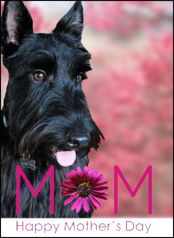 The Adventures of Ranger : Mom's Day