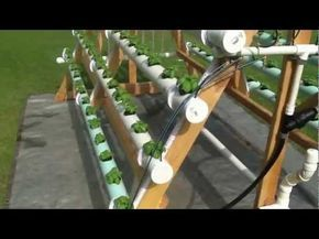 Cómo crear un sistema hidropónico casero con 168 plantas