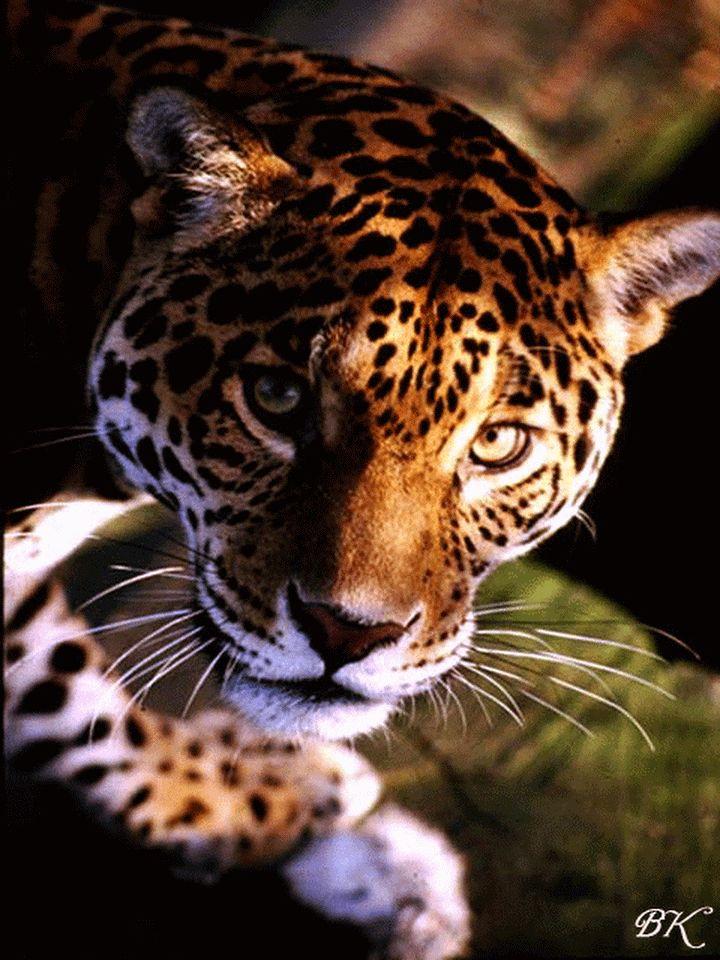 Гиф красивые животные